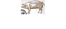 Pickled Pig